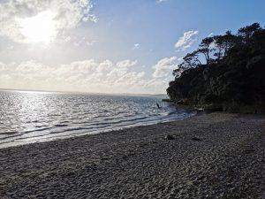 point chevalier beach sam loveridge